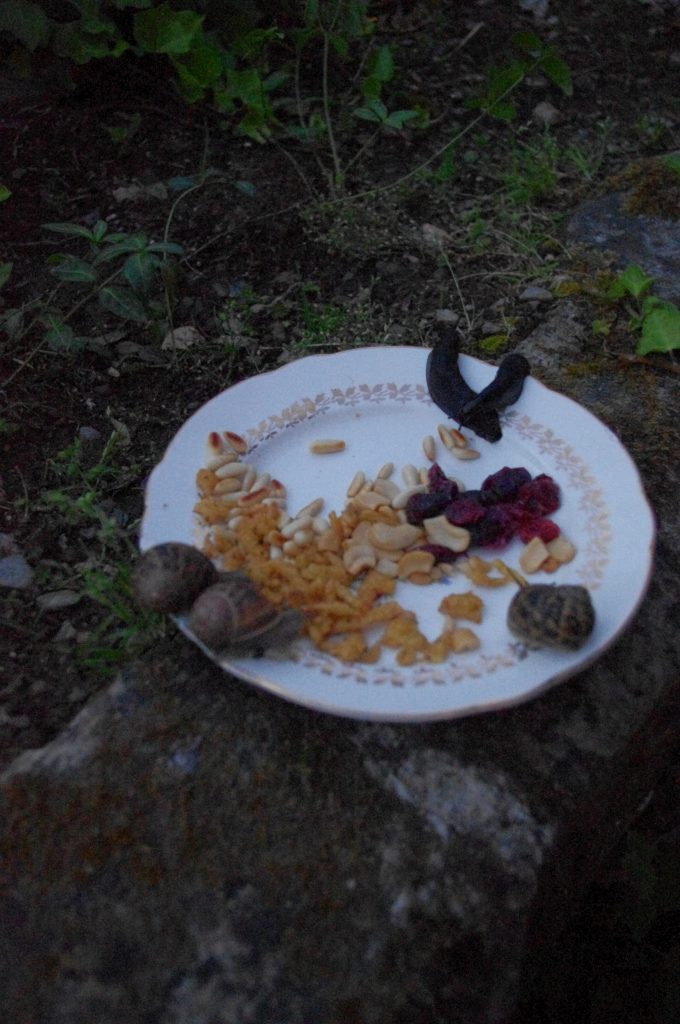 snails eating plate of nuts