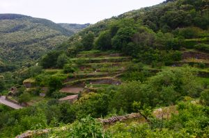 Terraced Gardens in Labastide Esparbairenque