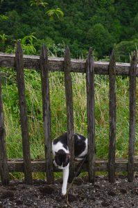 Village Cat, Labastide Esparbairenque
