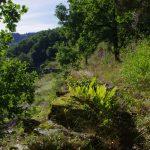 Black Mountains path, France