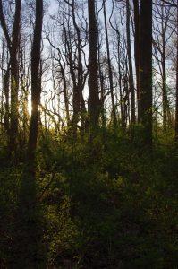 setting sun hike