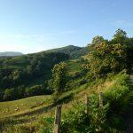 Walking through the Pyrenees, Camino de Santiago