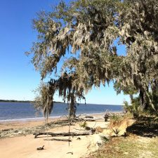 Beware the raccoons!- Cumberland Island Camping Adventure, Part One