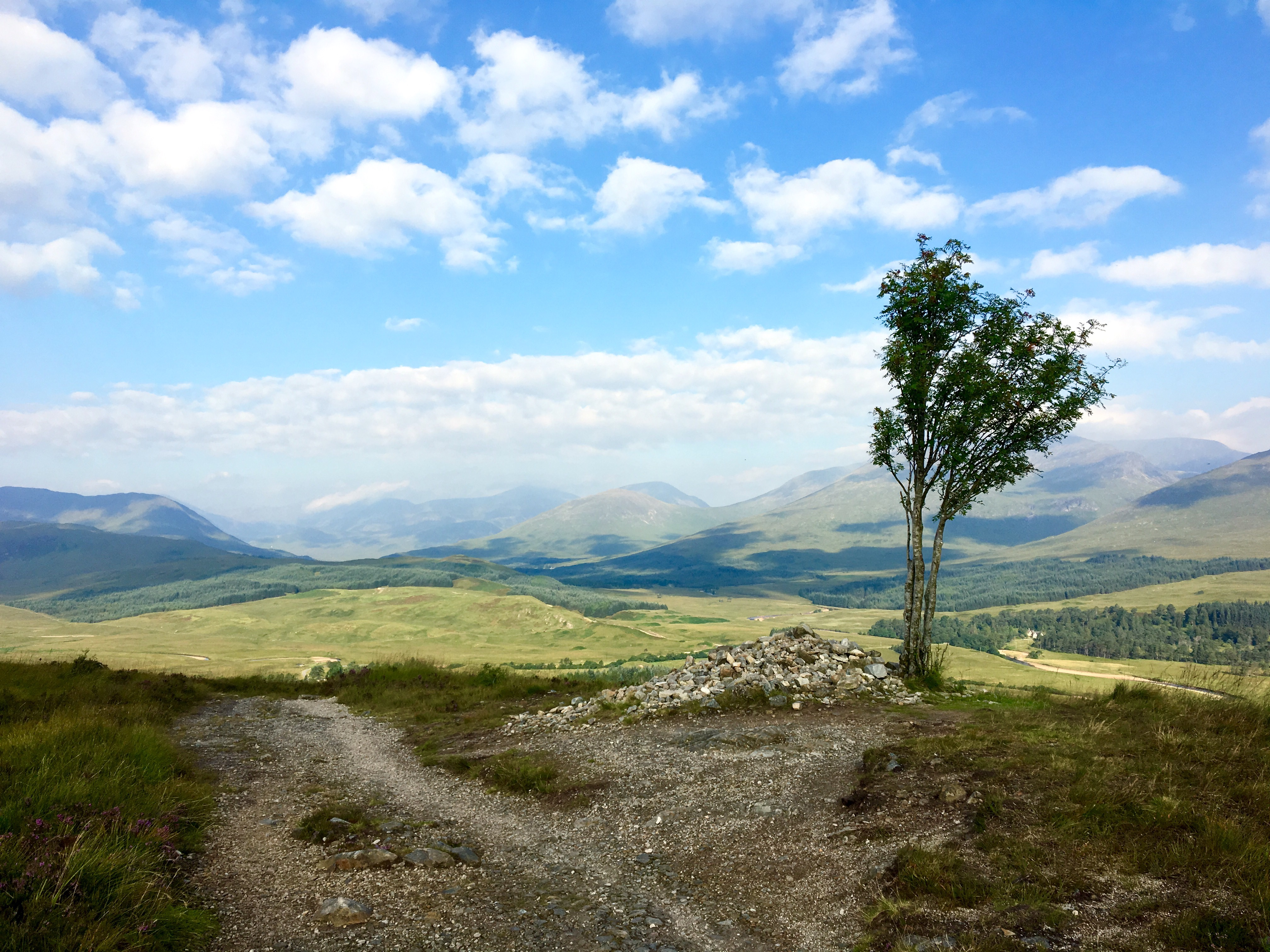 Tree and landscape on the West Highland Way, Scotland