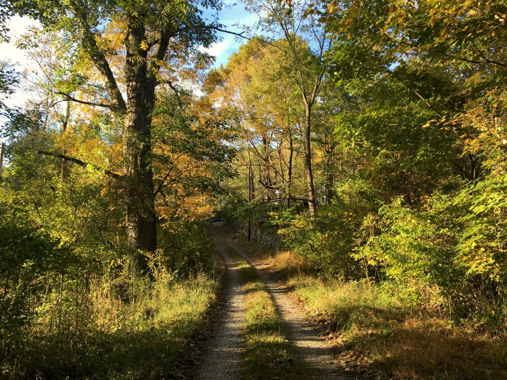 Fall in Ridley Creek State Park