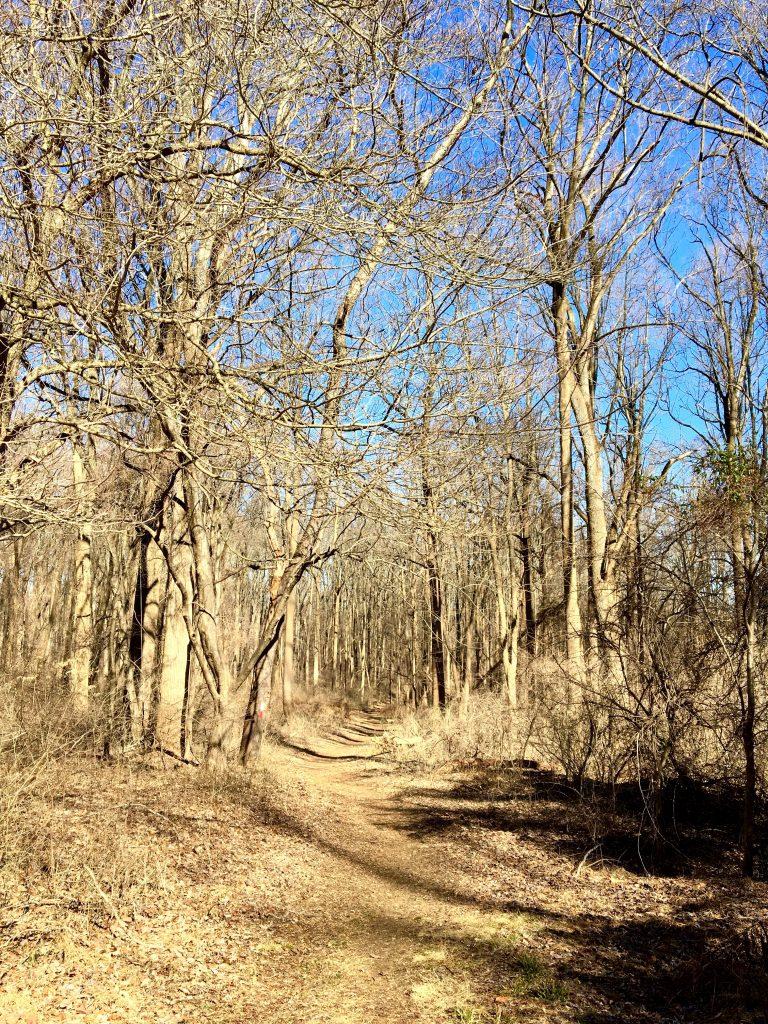 Secret trail, Tyler Arboretum, Philadelphia PA
