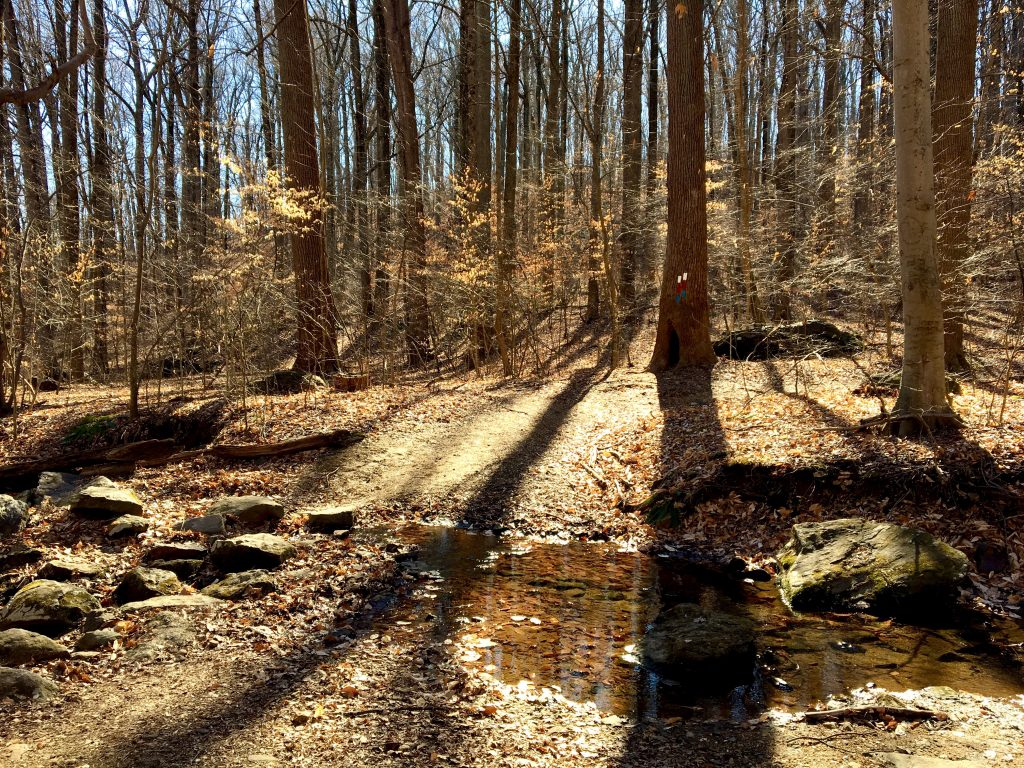 Creek in Tyler Arboretum, PA