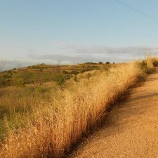 Things that surprised me about the Camino de Santiago