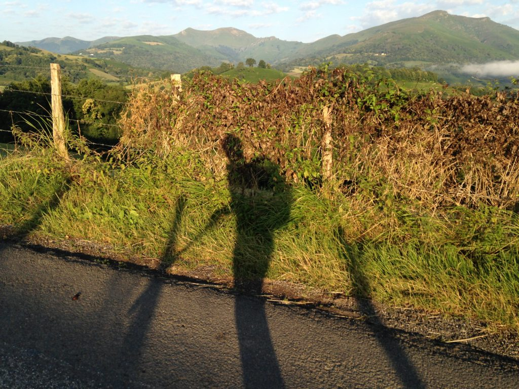 Pilgrim shadow on the Camino
