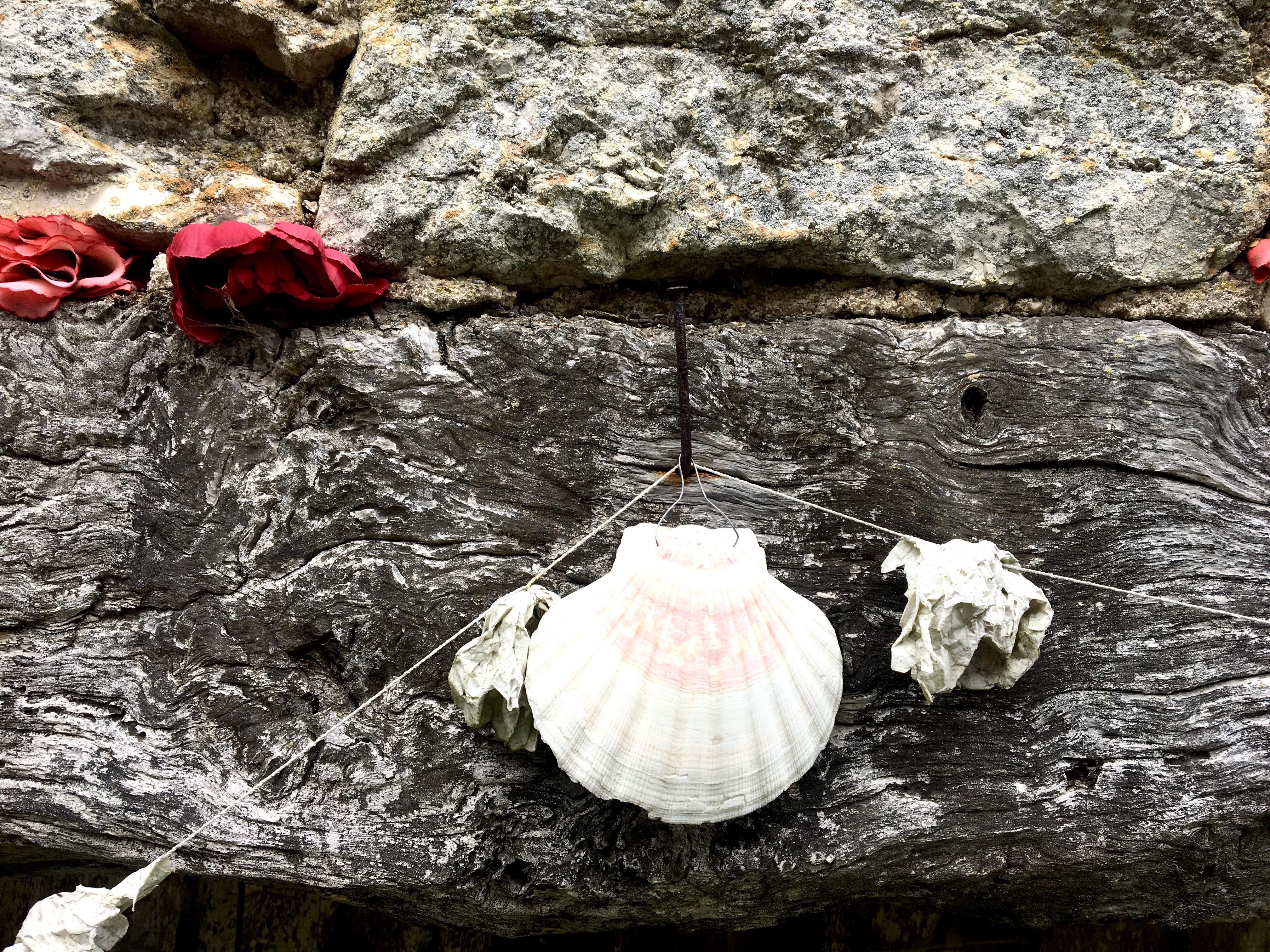 Camino de Santiago, scallop shell