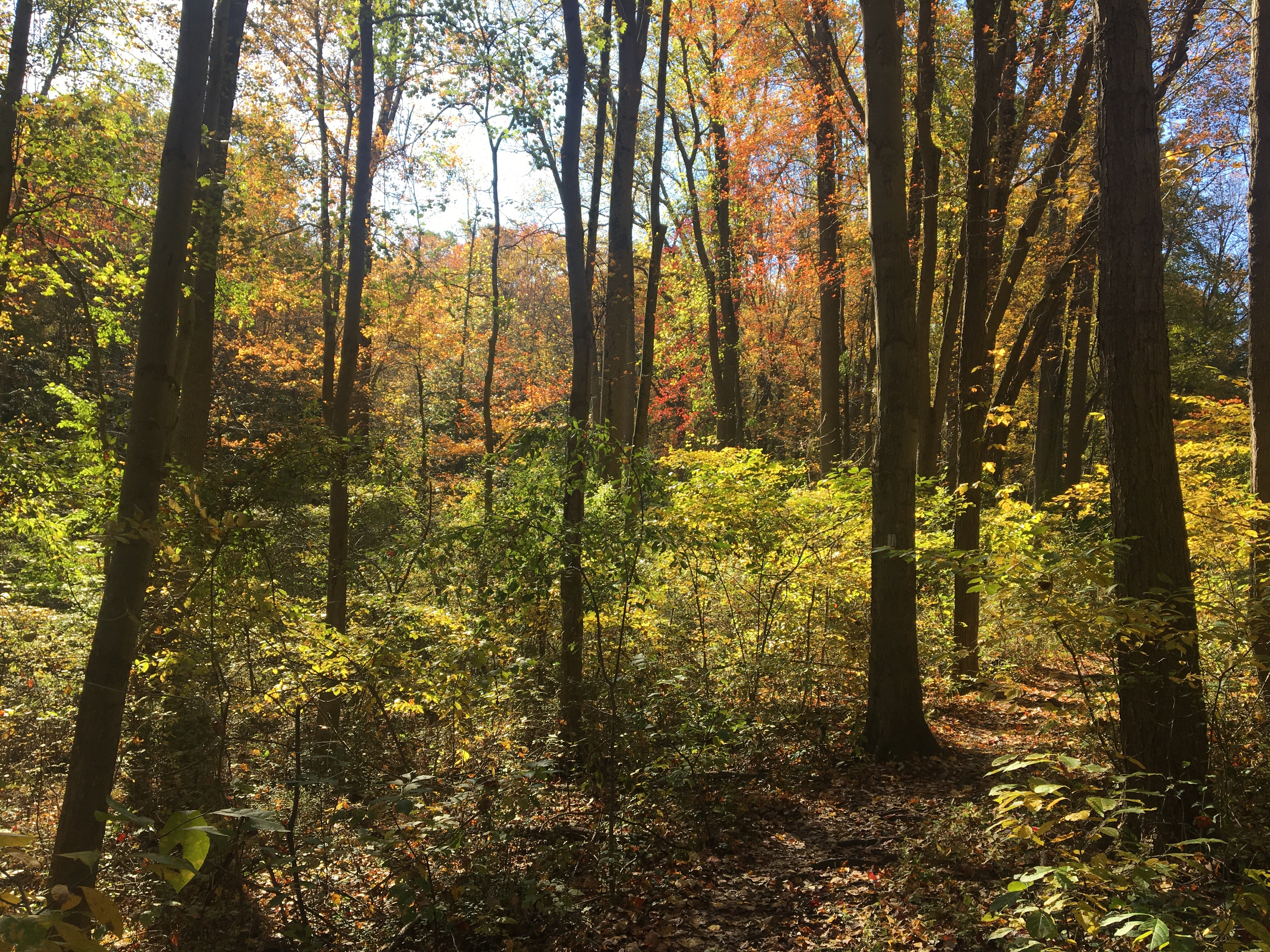 Ridley Creek State Park in the fall