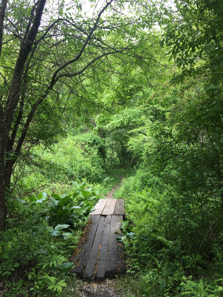 Ridley Creek State Park spring