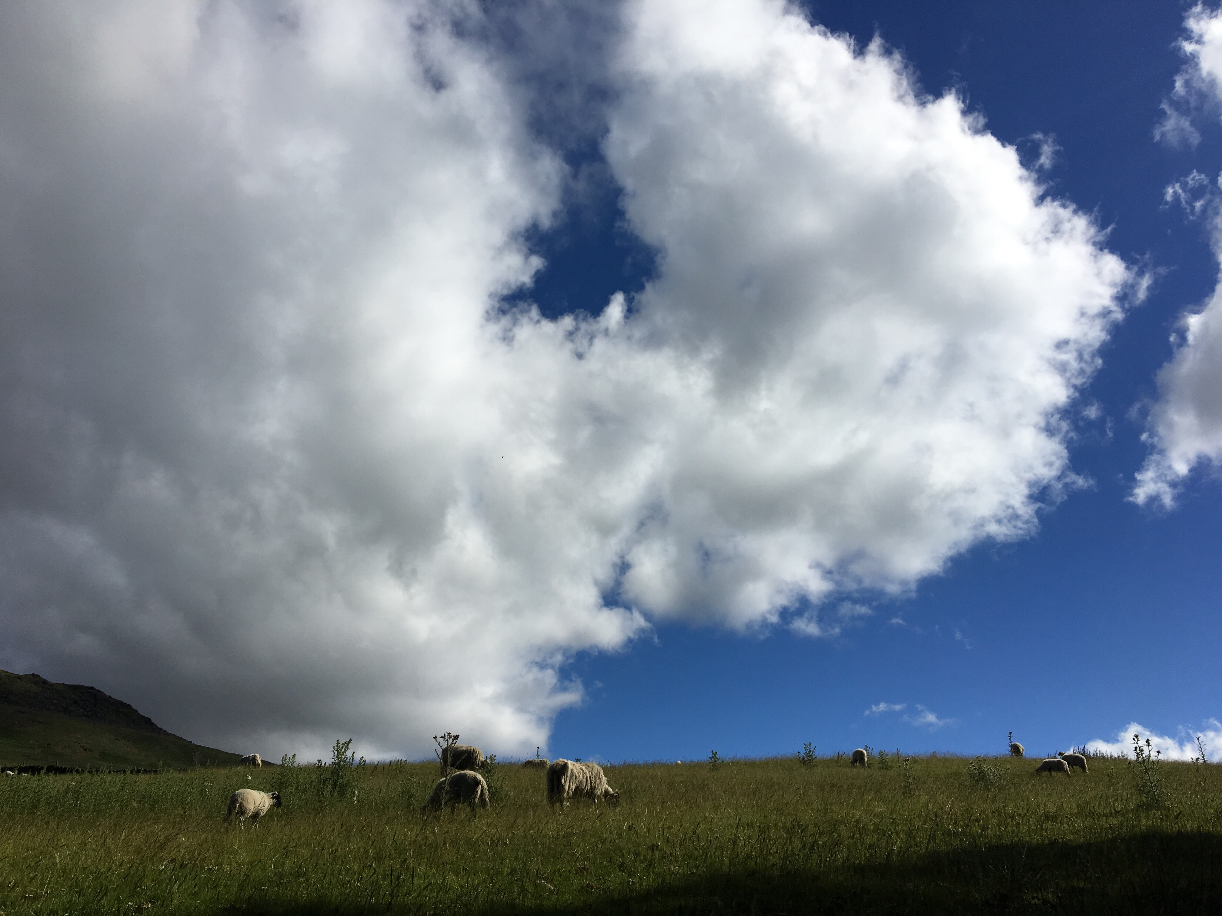 Sheep and clouds, Pennine Way