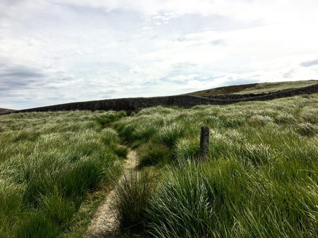 path through the moorland heading to Top Withens, Pennine Way