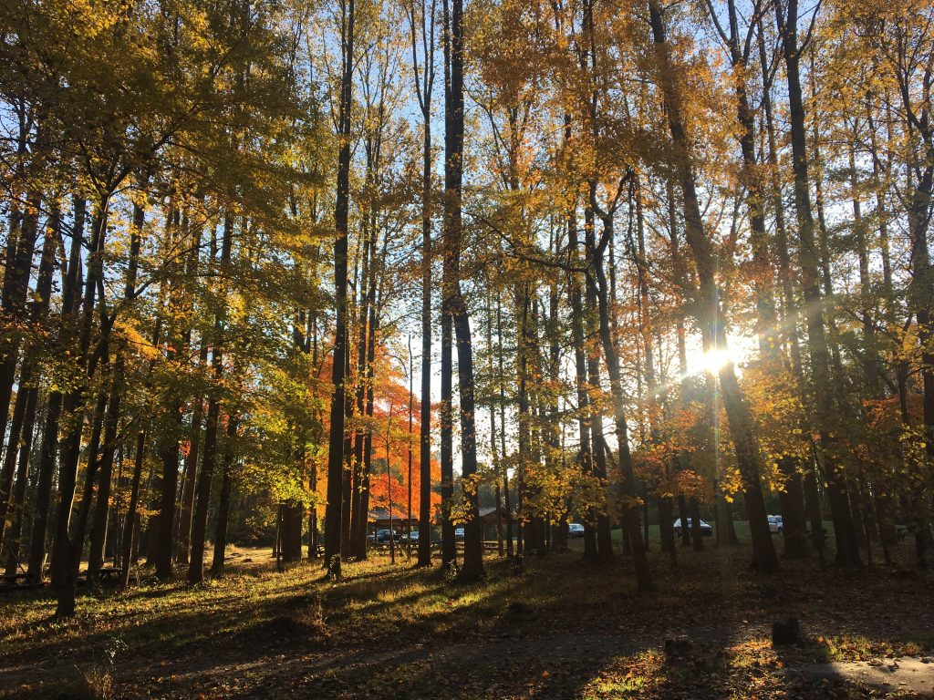 fall day in Ridley Creek State Park