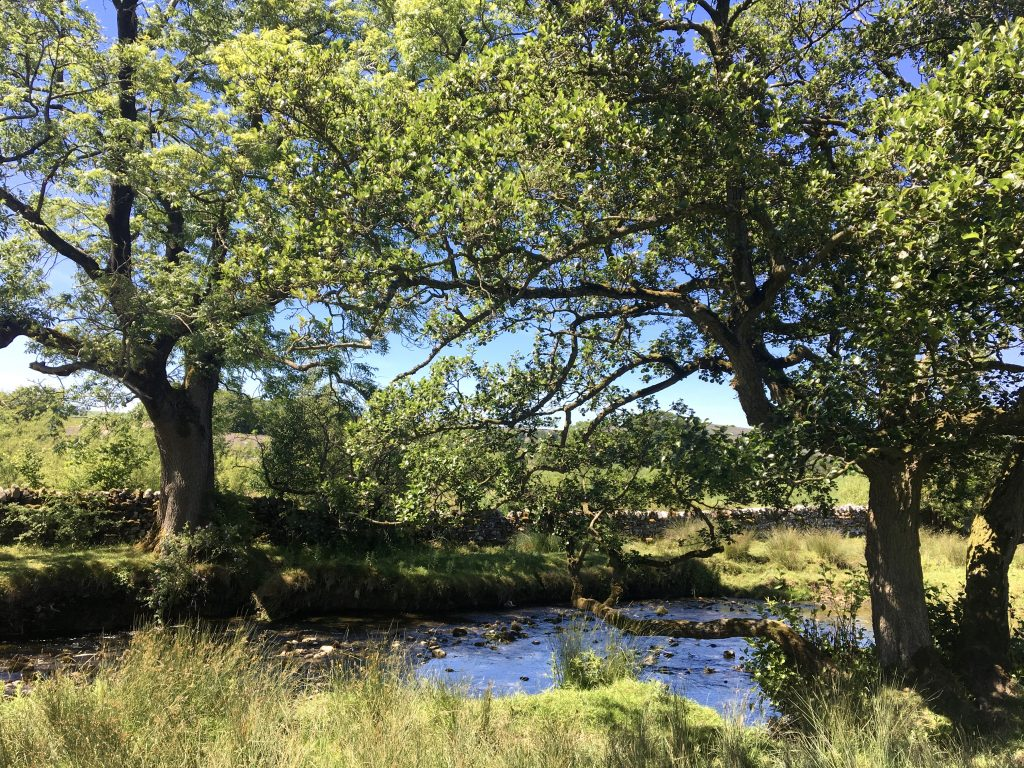Trees and creek, Pennine Way