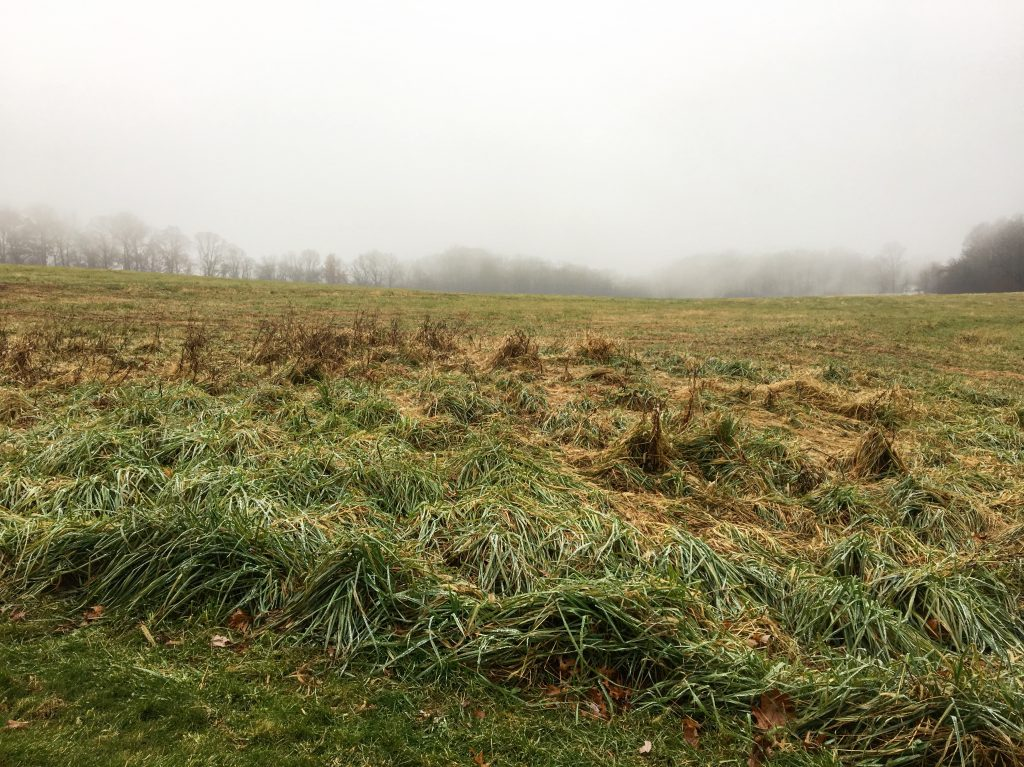 Brandywine battlefield in fog