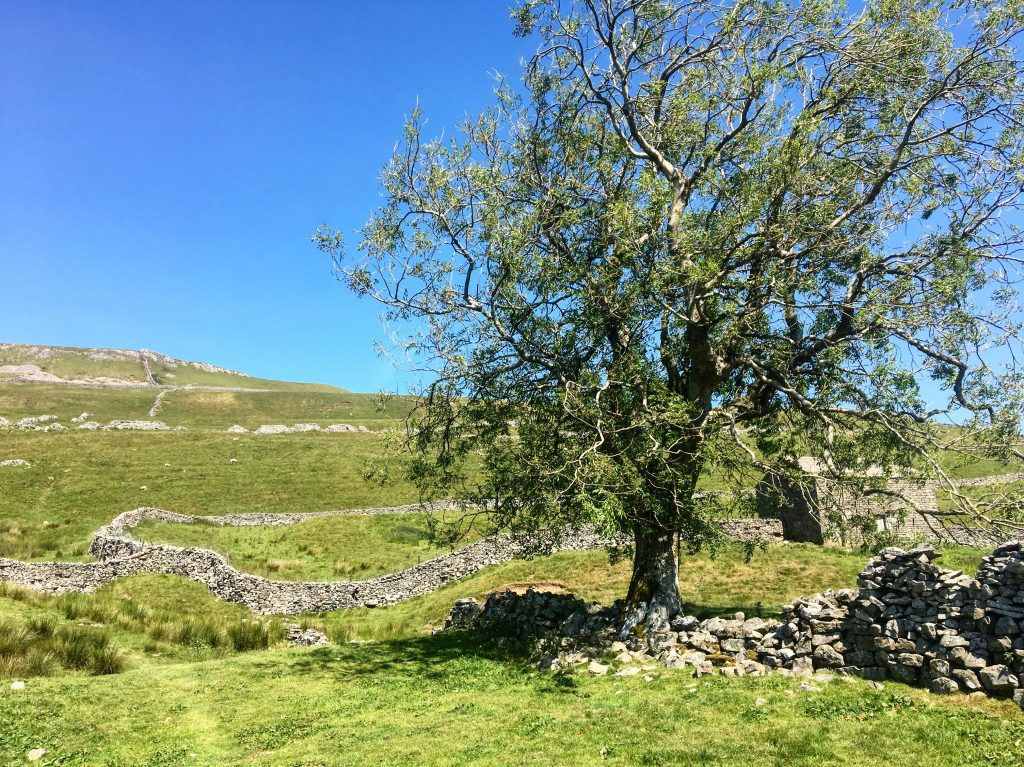 Walking through Swalesdale on the Pennine Way