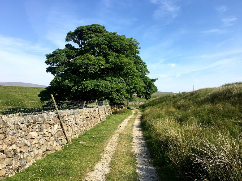 Path with tree, Pennine Way