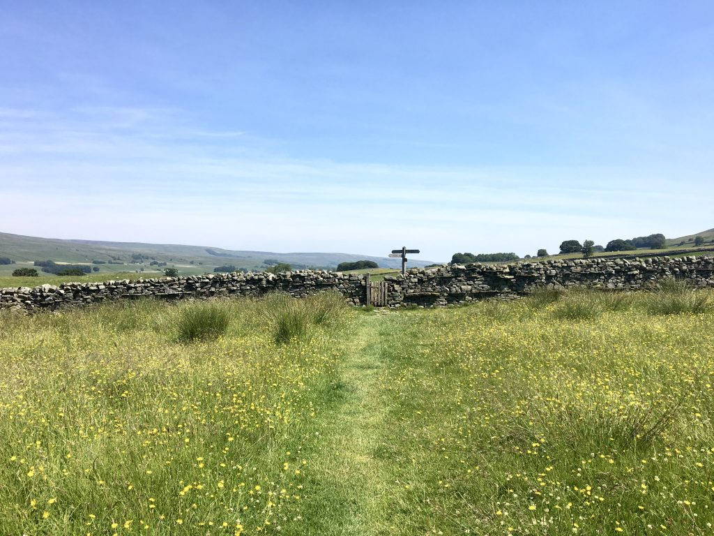 Single file path through meadow, Pennine Way