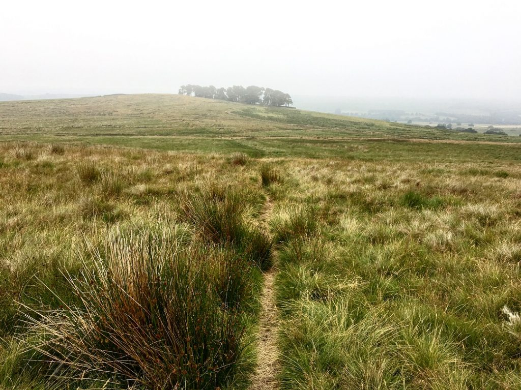 Path through moorland, Day 14 on the Pennine Way
