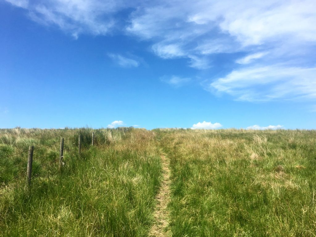 Path through Blenkinsopp Common, Pennine Way