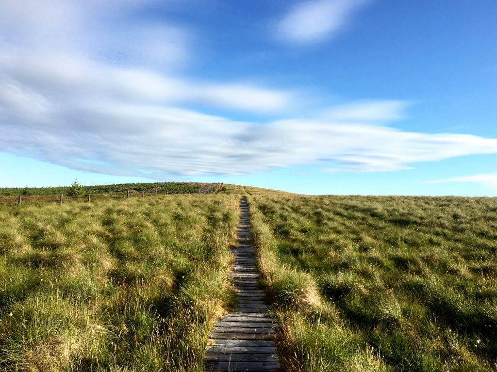 Wooden planks, Byrness to Kirk Yetholm, Pennine Way