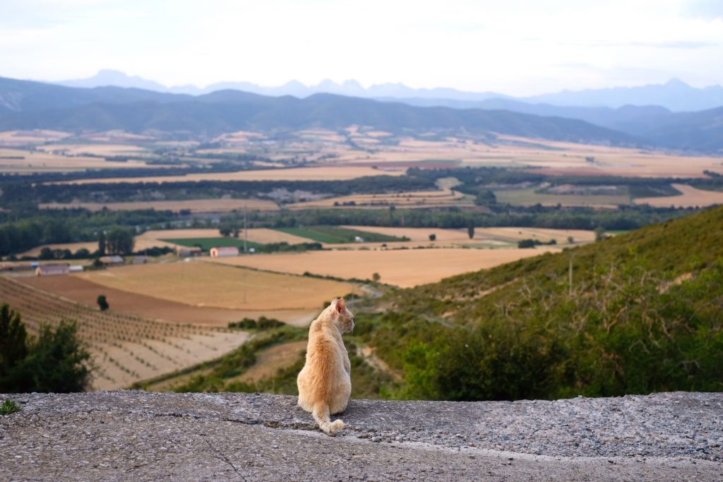 Camino Aragonés guide; view from Arrés