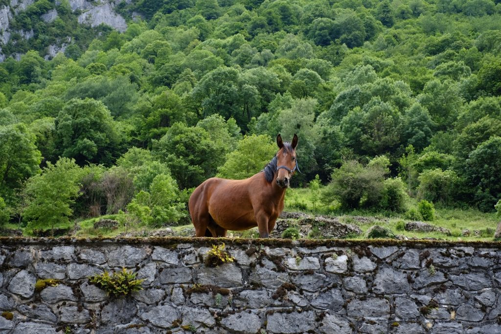 Curious horse on the Camino Aragonés