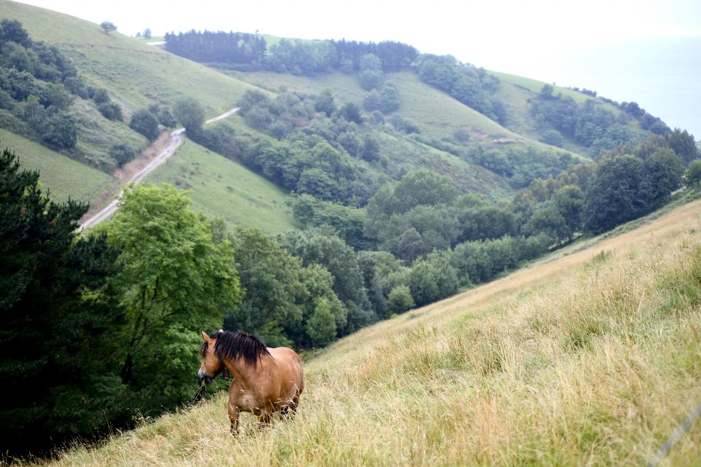 15 photos that will make you fall in love with the Camino del Norte; horse on hillside