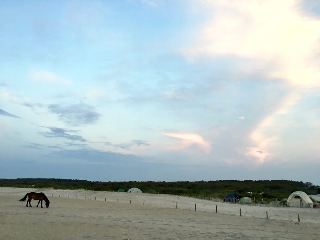 Wild horse on beach, Assateague Island, Maryland