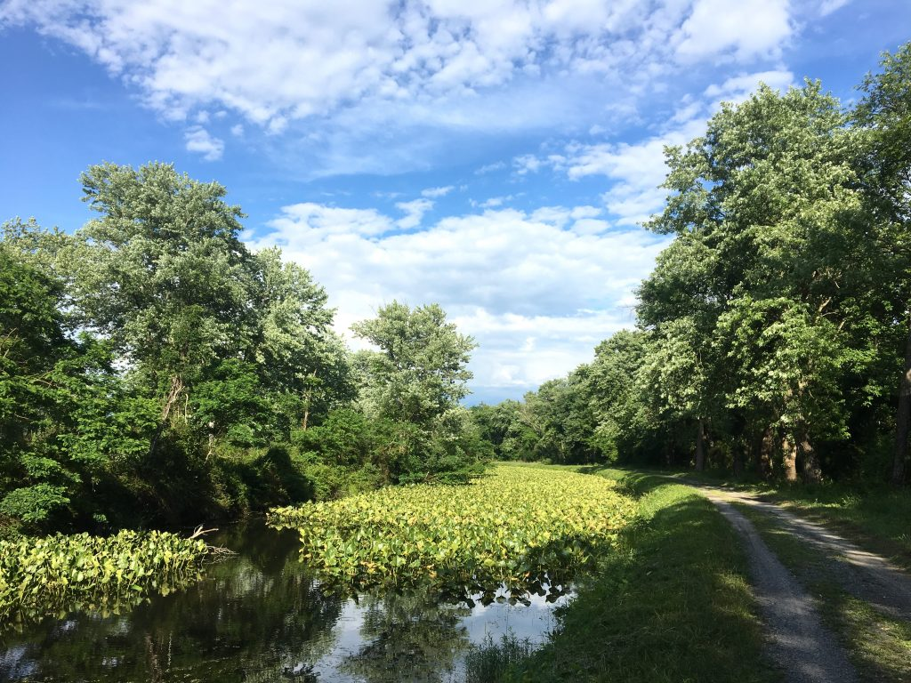 sunny day on the C&O canal towpath