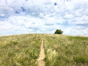Prairie, Theodore Roosevelt National Park, ND