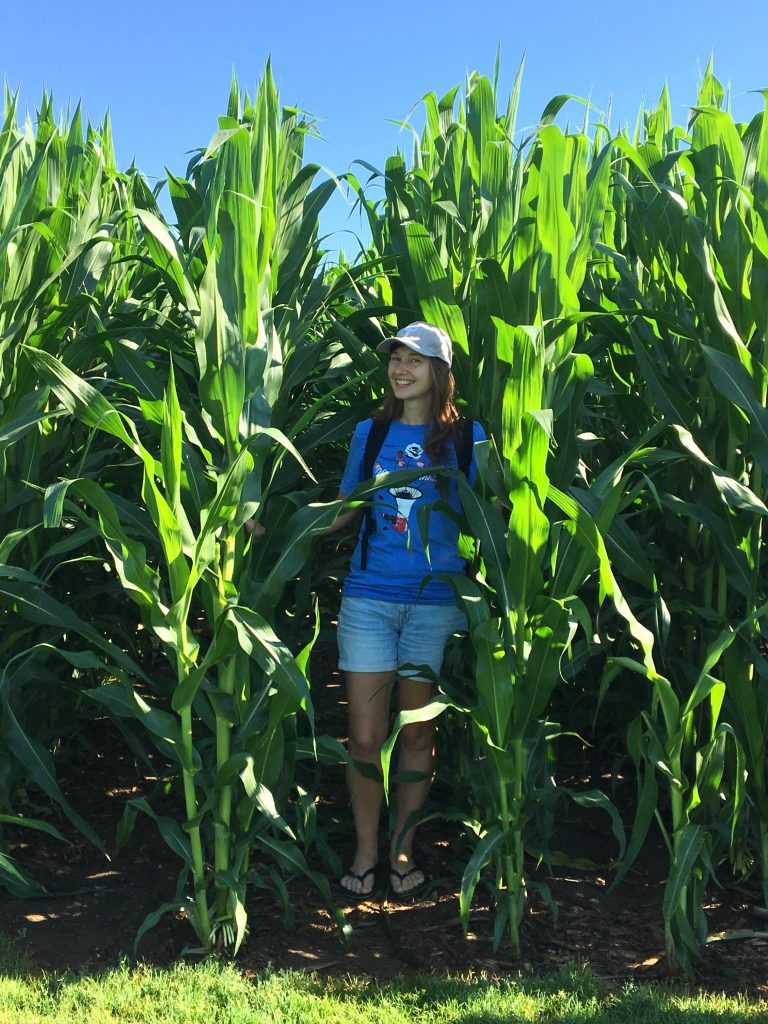 Standing in the corn, Field of Dreams movie site, Dyersville, Iowa
