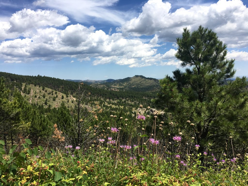 Hike in Custer State Park, SD
