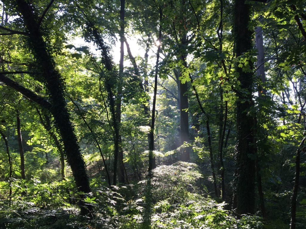 Late summer sunlight through trees