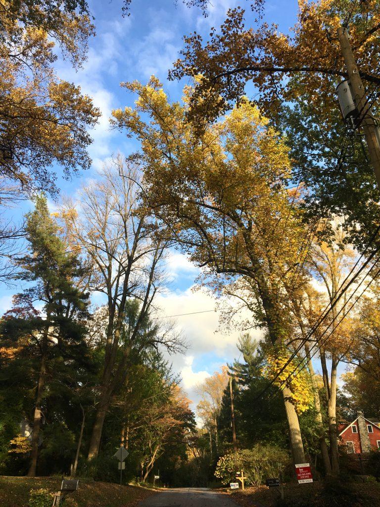 Fall neighborhood walk, southeastern PA