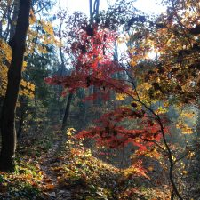 November Recap: Ringing bells and blazing sunsets and writing the book!