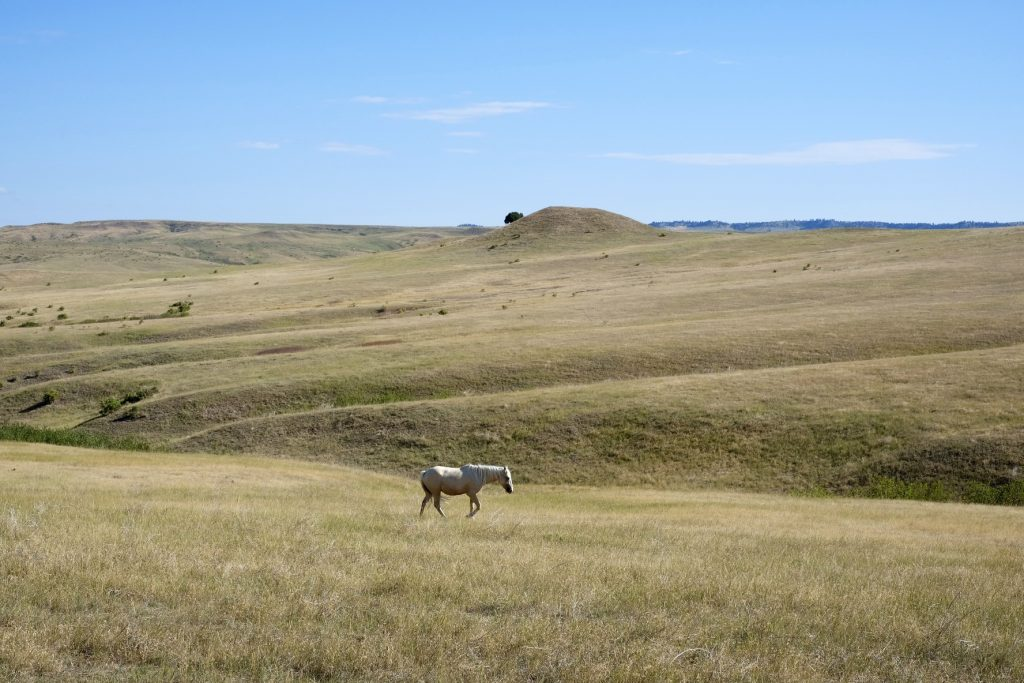 Lone horse in a field at Little Bighorn National Monument, Montana