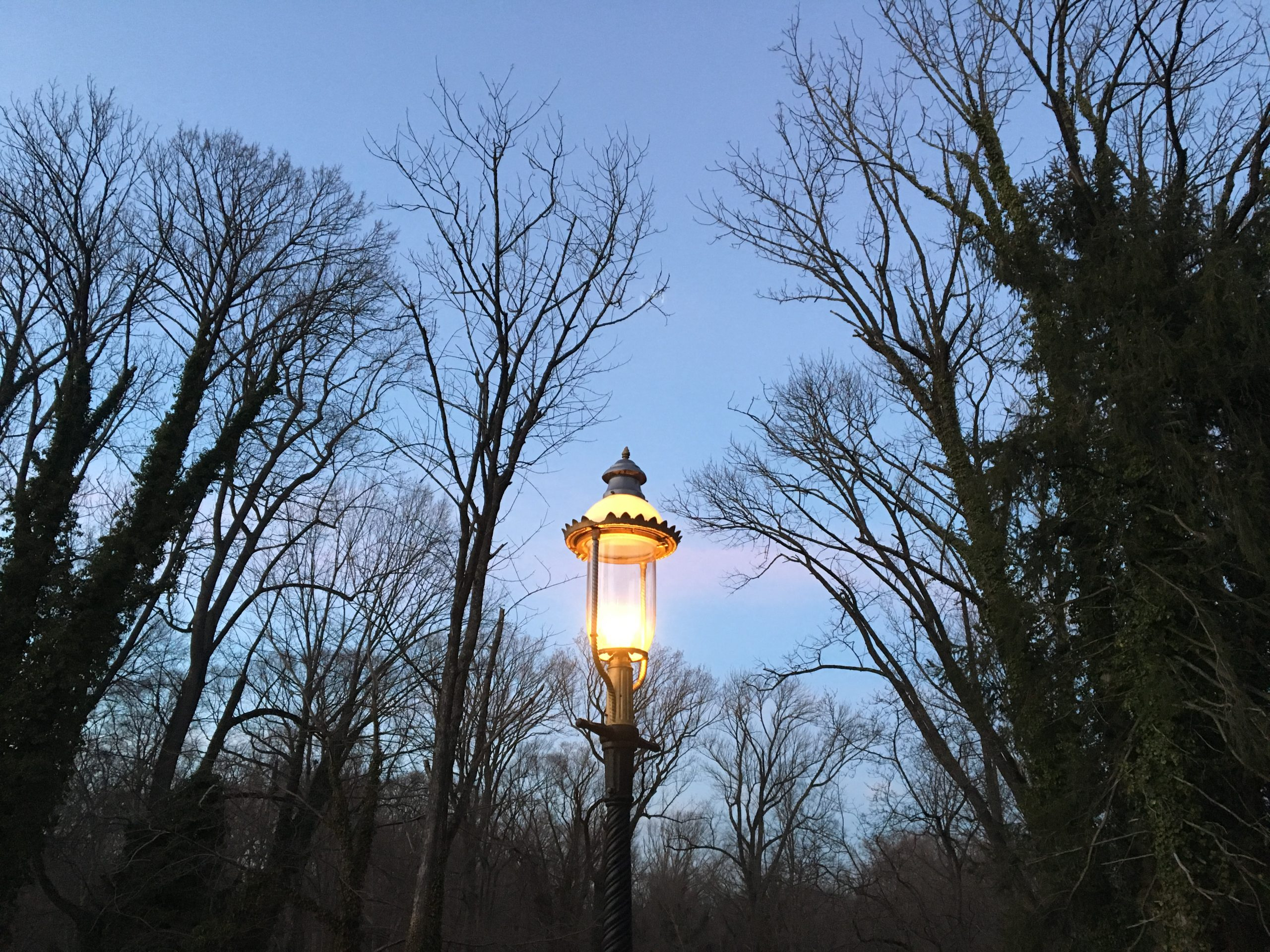 streetlamp, winter dusk