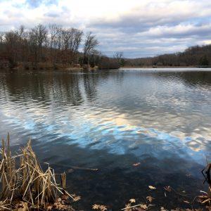 January Recap: A Long Winter, In My Nest