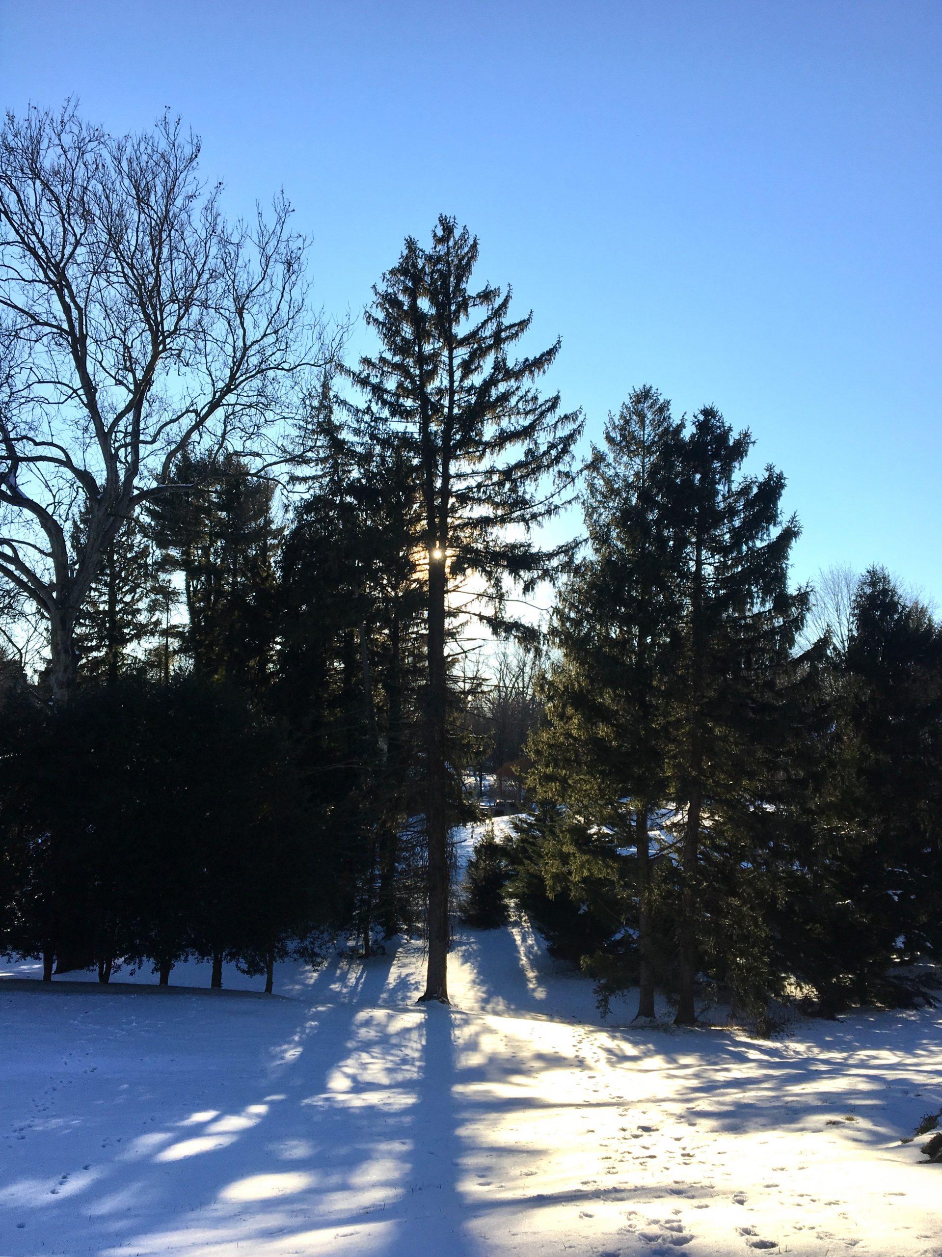 Sunlight throwing long shadows on snow