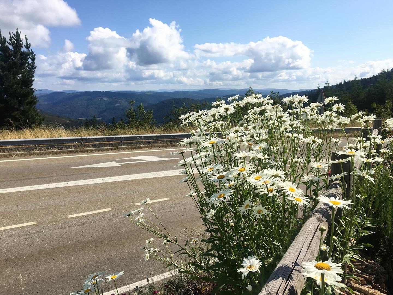 Walking to A Fonsagrada, Camino Primitivo