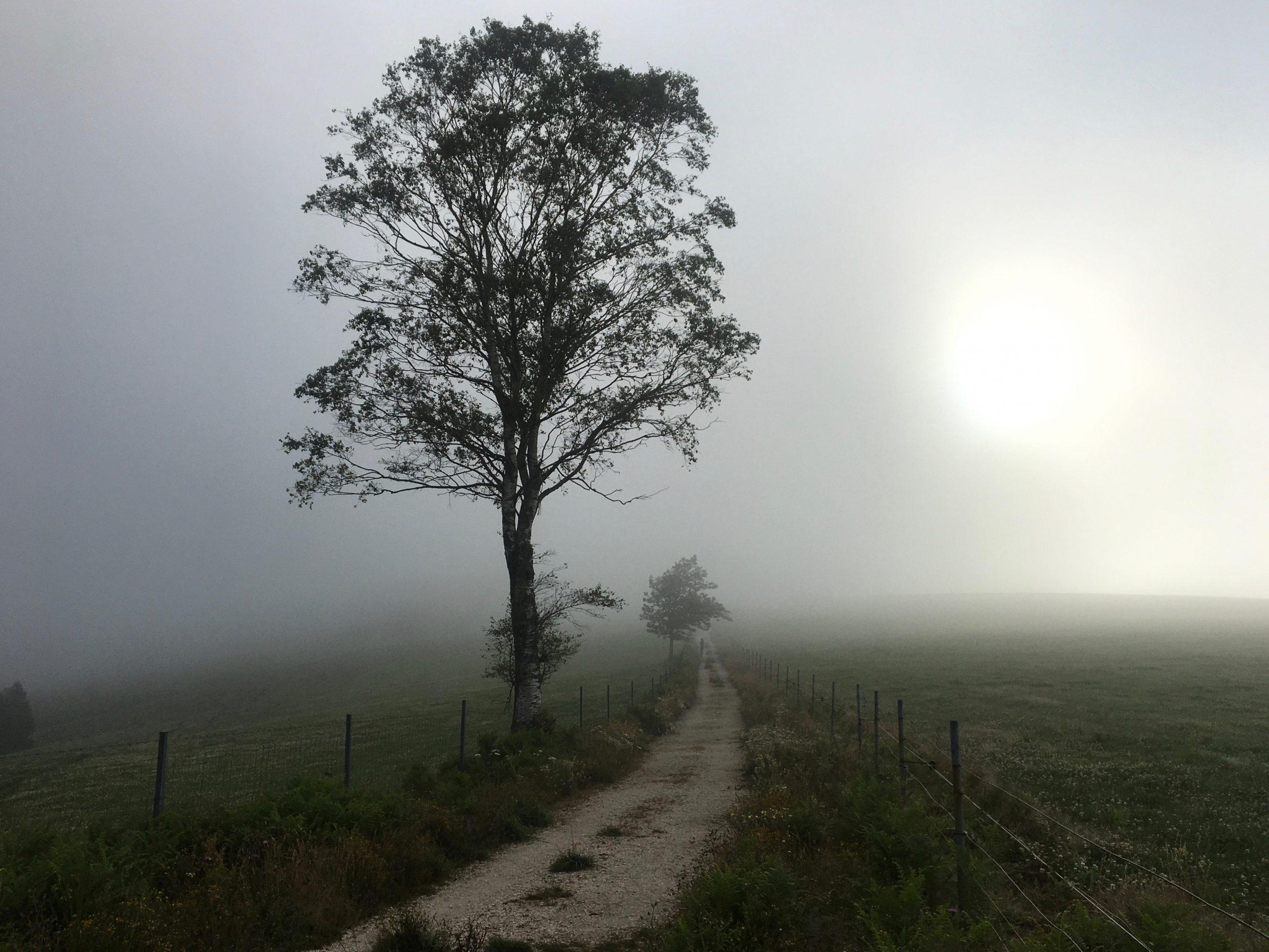 Lone tree, Camino Primitivo