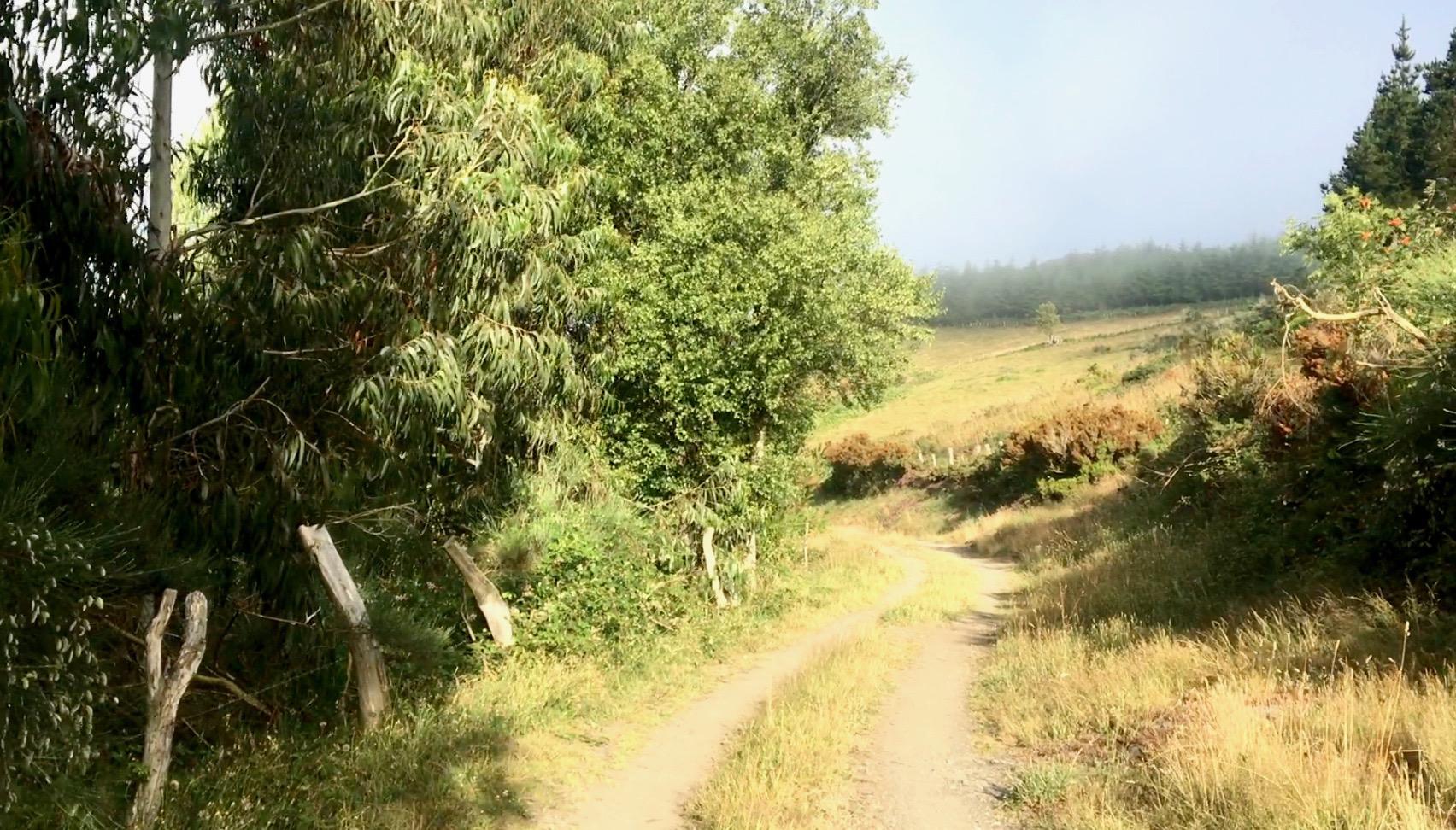 Path of the Camino Primitivo