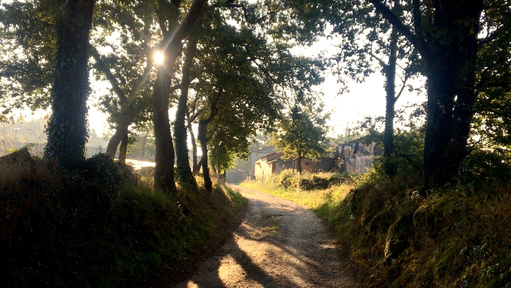 Sunlit path of the Camino, Day 7 on the Camino Primitivo